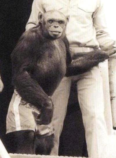 oliver el chimpace humano 2