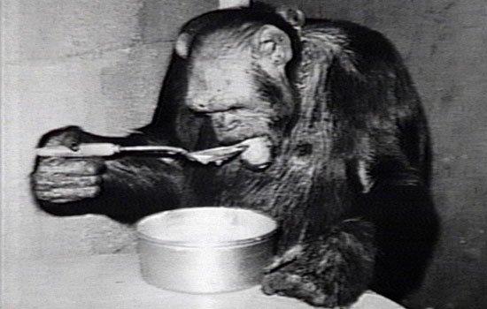 oliver el chimpace humano 9