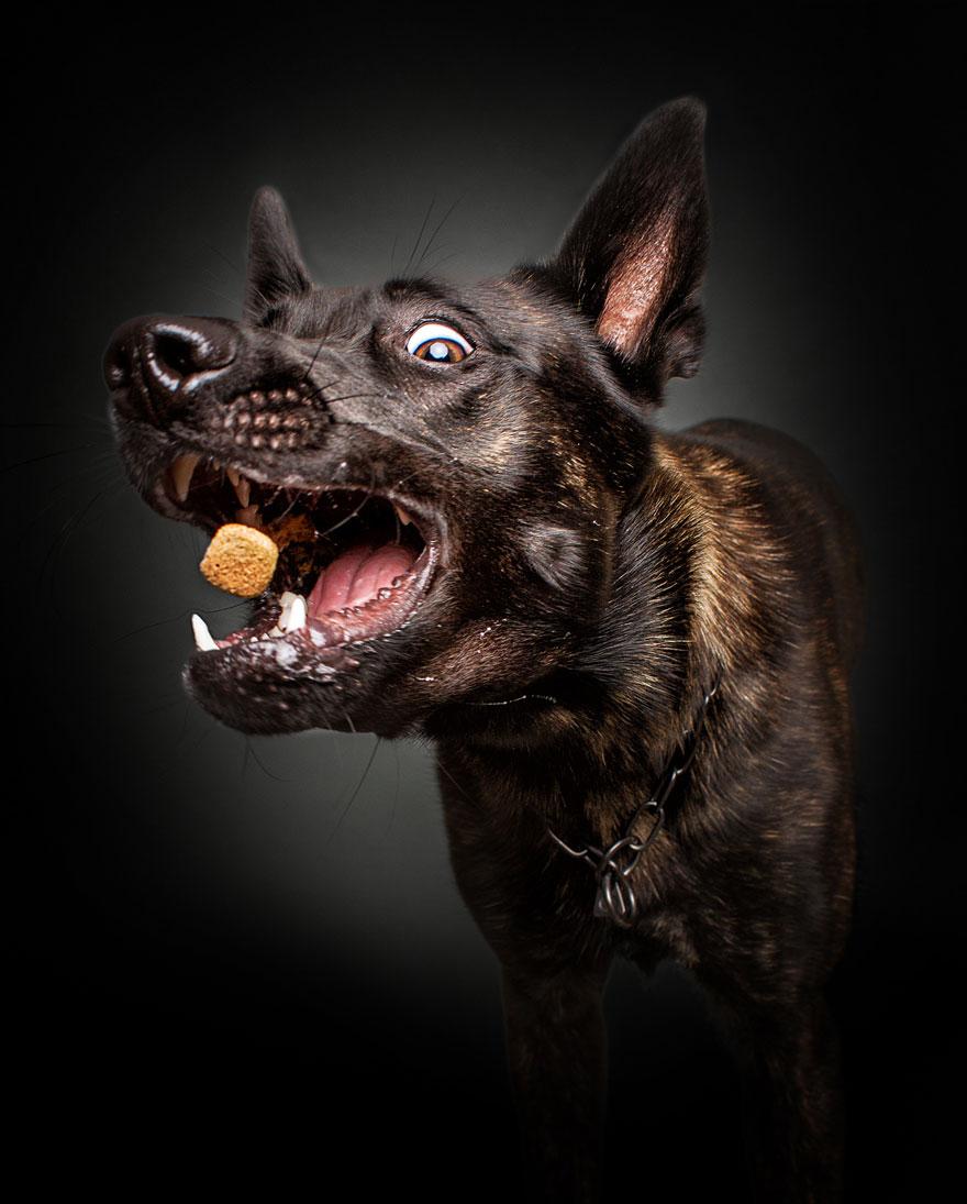 perros atrapando comida 1