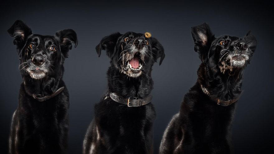perros atrapando comida 10