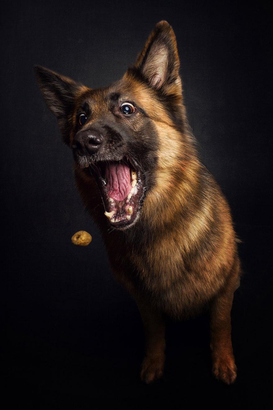 perros atrapando comida 7