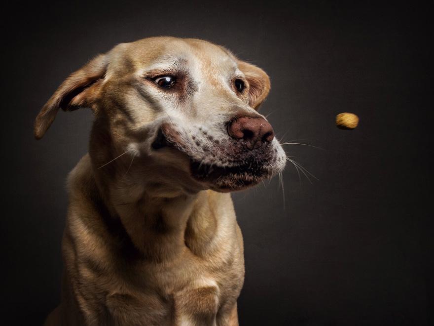 perros atrapando comida 9