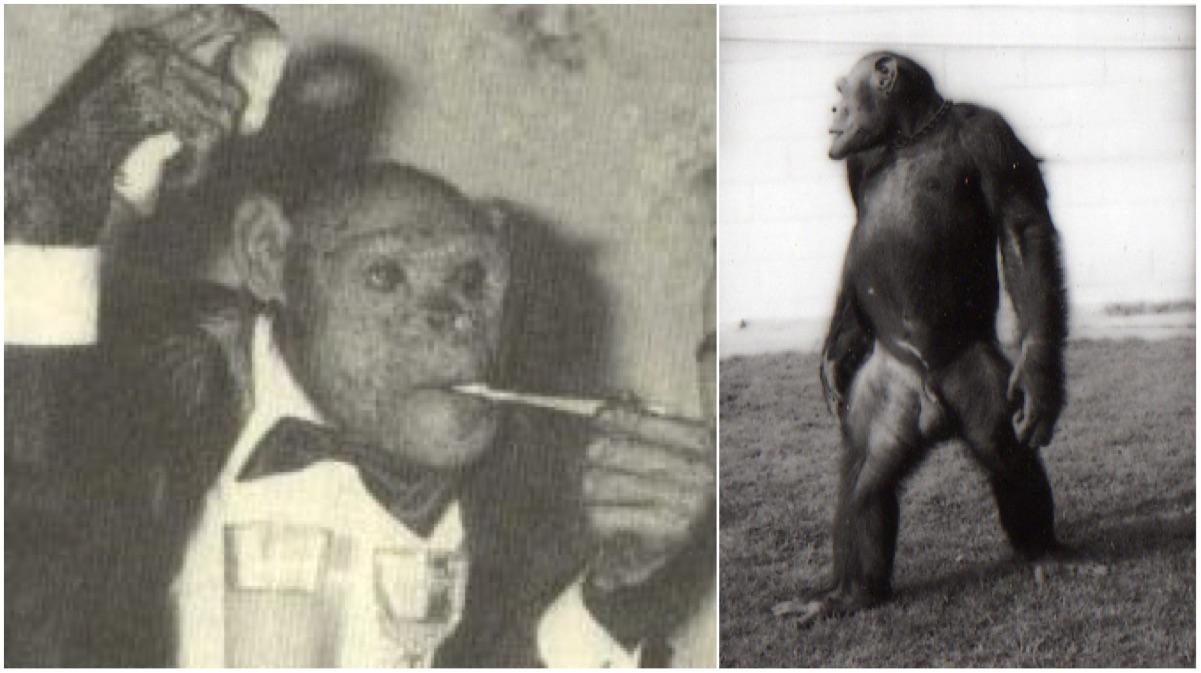 portada oliver el chimpace