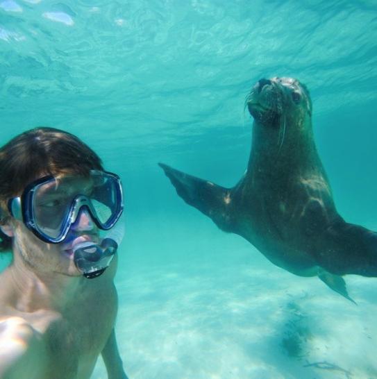 selfies con animales 31