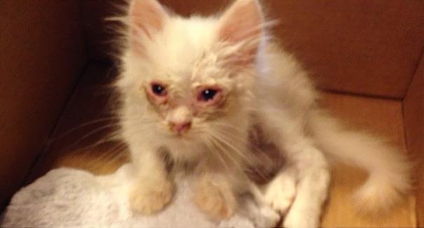 silas el gato abandonado que resulto ser precioso 1