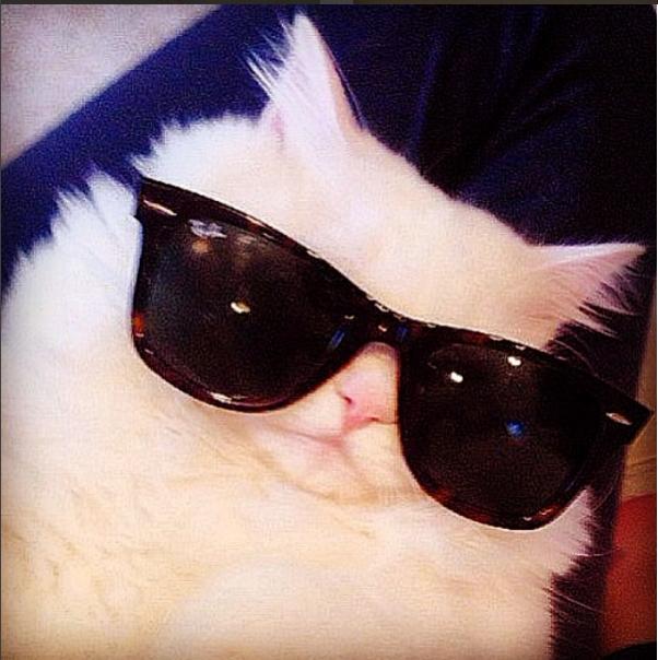 silas el gato abandonado que resulto ser precioso 12
