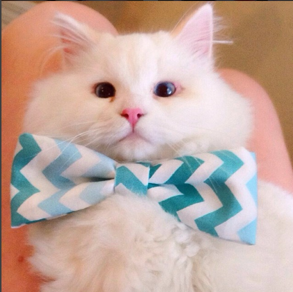 silas el gato abandonado que resulto ser precioso 14