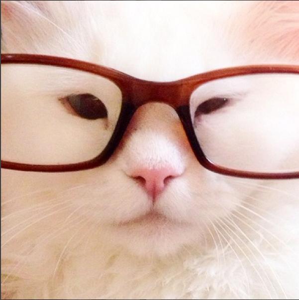 silas el gato abandonado que resulto ser precioso 15