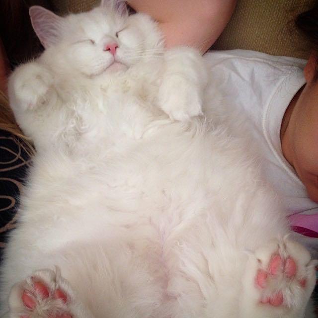 silas el gato abandonado que resulto ser precioso 4