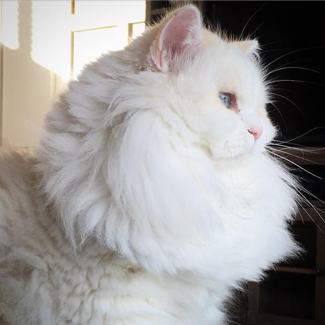 silas el gato abandonado que resulto ser precioso 5