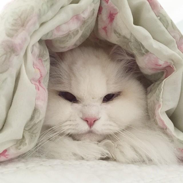 silas el gato abandonado que resulto ser precioso 8