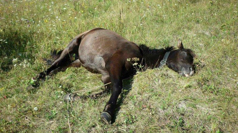 10 curiosidades sobre los animales y el sueño 1