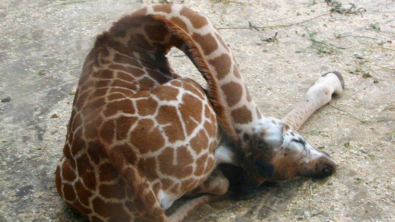 10 curiosidades sobre los animales y el sueño 3