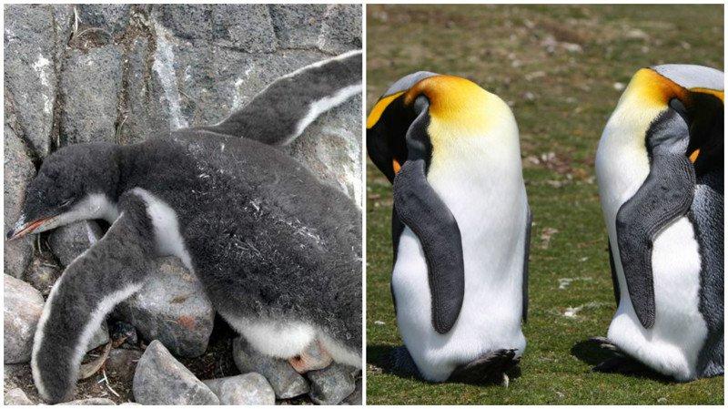 10 curiosidades sobre los animales y el sueño 5