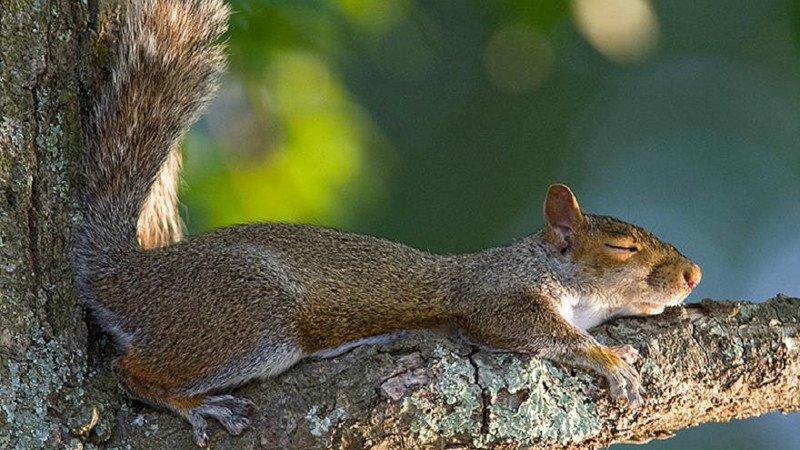 10 curiosidades sobre los animales y el sueño 7