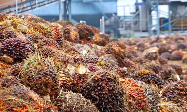 alimentos que dañan nuestro medio ambiente y no lo sabias 5