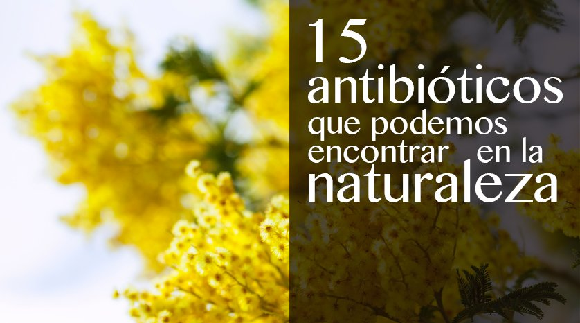 antibioticos