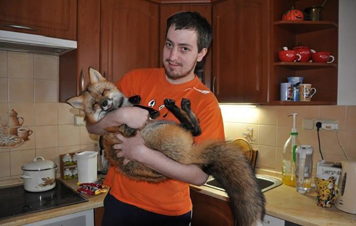 chico salva a zorro de convertirse en un bols y este se convierte en su mascota 2