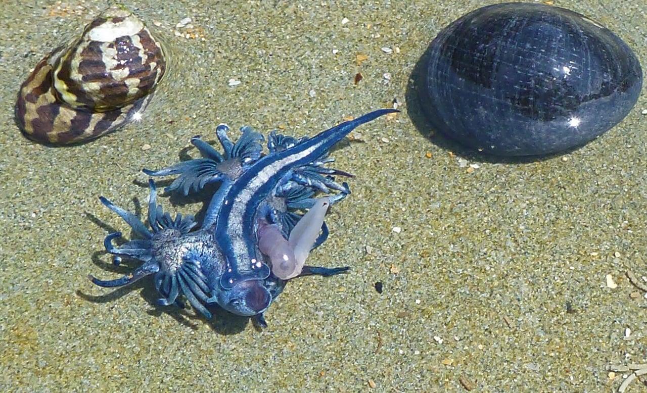 dragon azul f 14