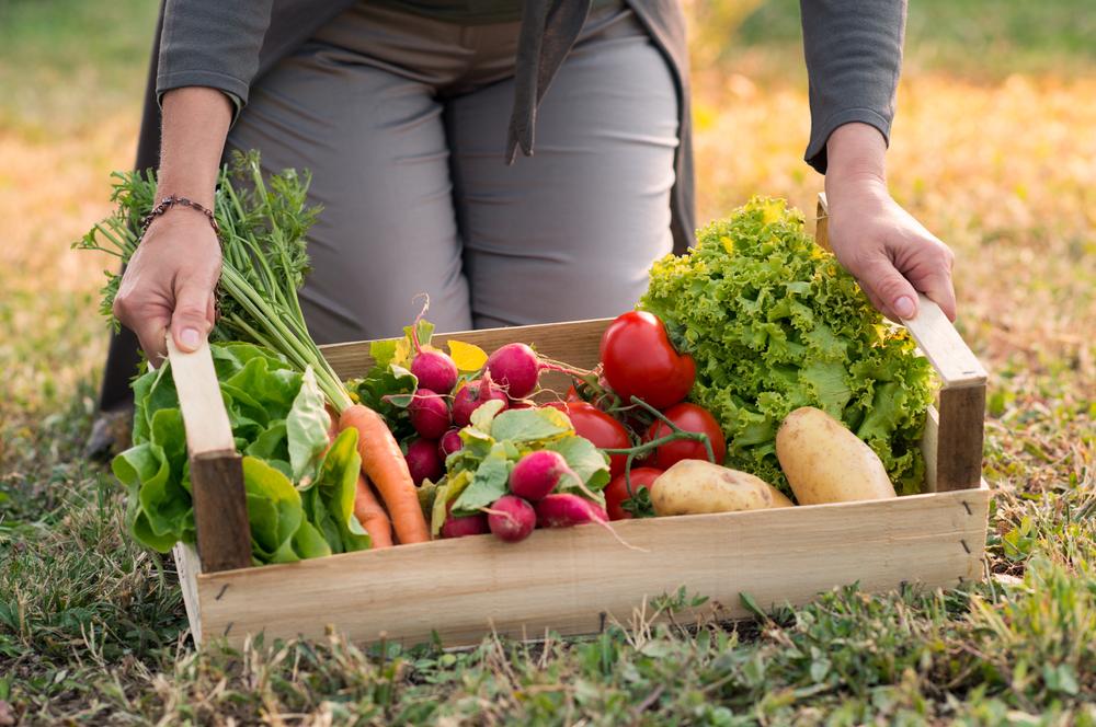 Todo lo que puedes cultivar en un metro cuadrado