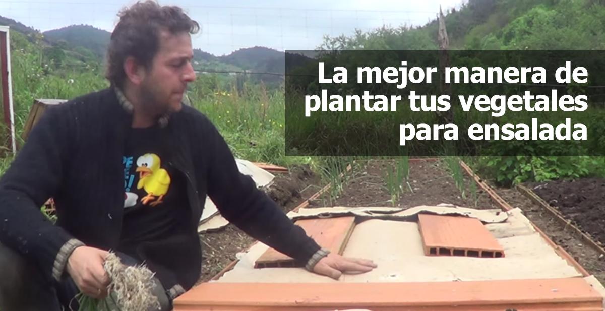 la mejor manera de plantar tus vegetales para ensalada