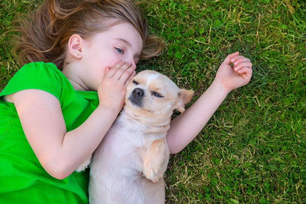 los perros entienden las emociones humanas