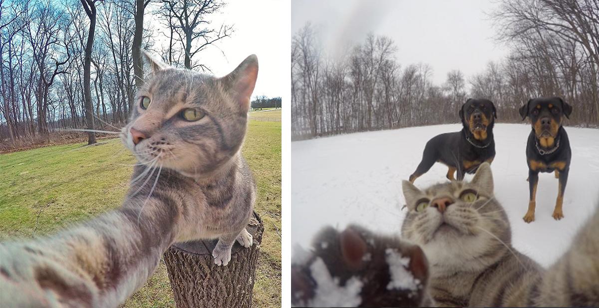 manny el gato que se hace los selfies mas graciosos de todo intenet