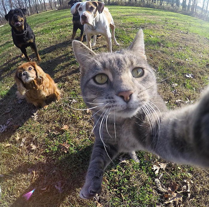 manny el gato que se hace selfies con sus amigos perrunos 1