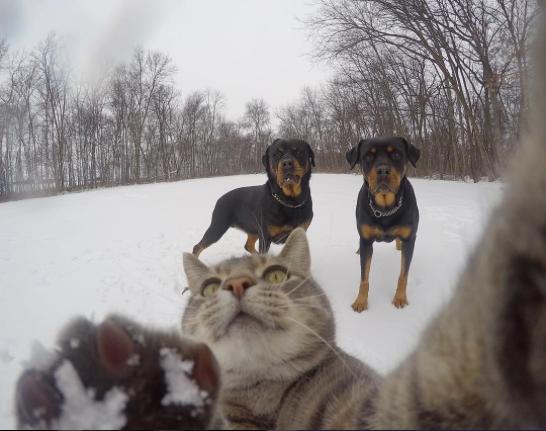 manny el gato que se hace selfies con sus amigos perrunos 10