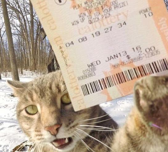 manny el gato que se hace selfies con sus amigos perrunos 12