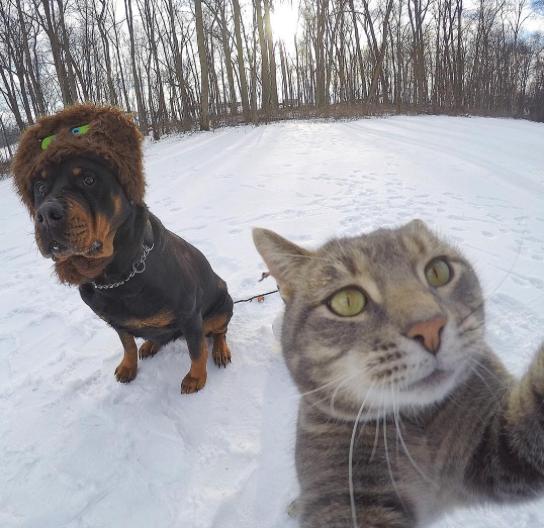 manny el gato que se hace selfies con sus amigos perrunos 13
