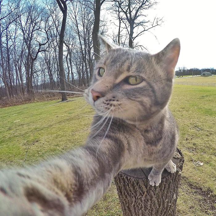 manny el gato que se hace selfies con sus amigos perrunos 2