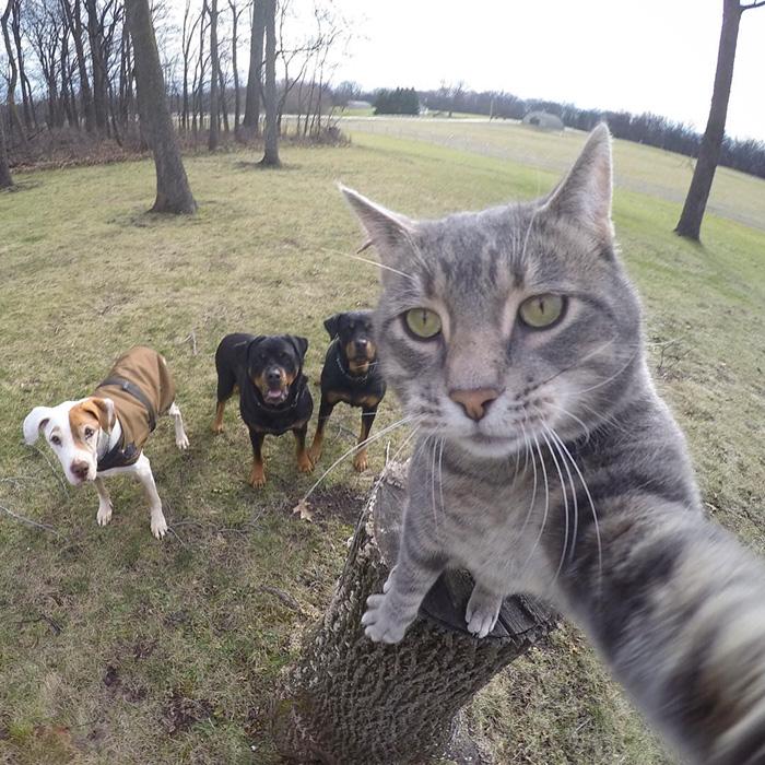 manny el gato que se hace selfies con sus amigos perrunos 3