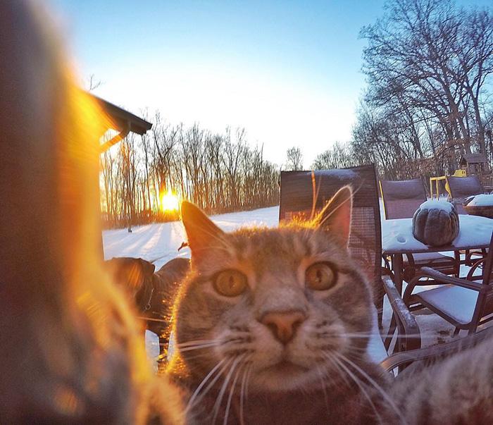 manny el gato que se hace selfies con sus amigos perrunos 4