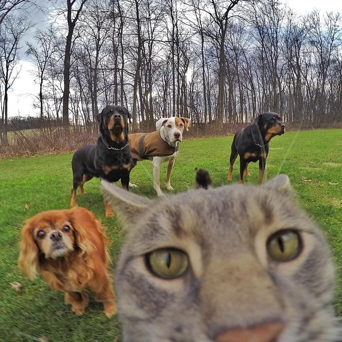 manny el gato que se hace selfies con sus amigos perrunos 5