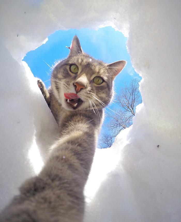 manny el gato que se hace selfies con sus amigos perrunos 6