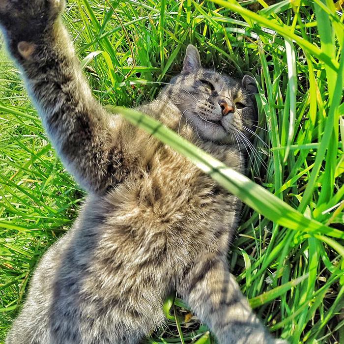 manny el gato que se hace selfies con sus amigos perrunos 8