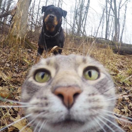manny el gato que se hace selfies con sus amigos perrunos 9