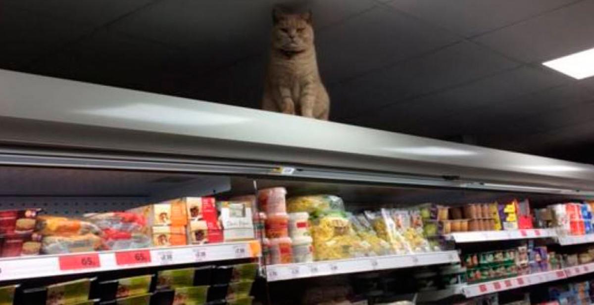 olly, el gato del supermercado