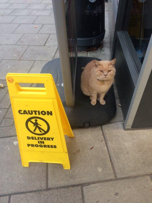 olly, el gato que se cuela en el supermercado sainsbury y lanza miradas acusadoras a los clientes 2