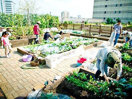 Comunidad de huertos de un metro cuadrado en Japón.