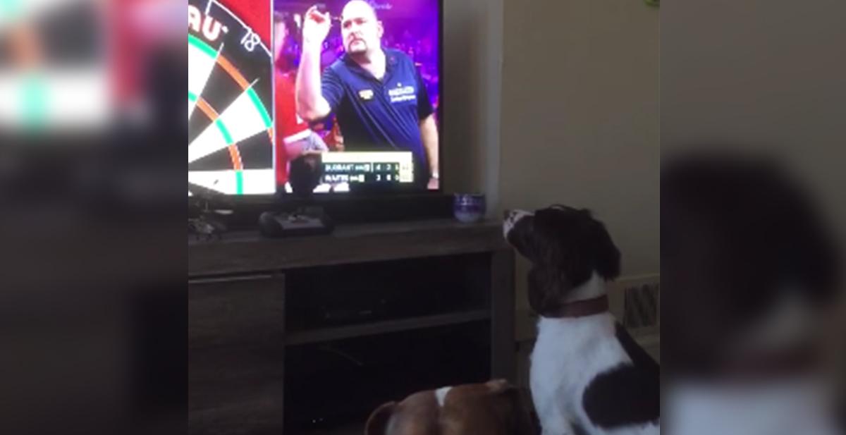 perro engañado por un concurso de lanzar dardos que daban por la television