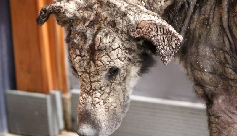La historia de petra, la perra rescata de las calles de Atenas1