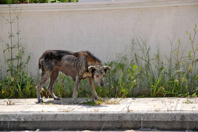 La historia de petra, la perra rescata de las calles de Atenas2