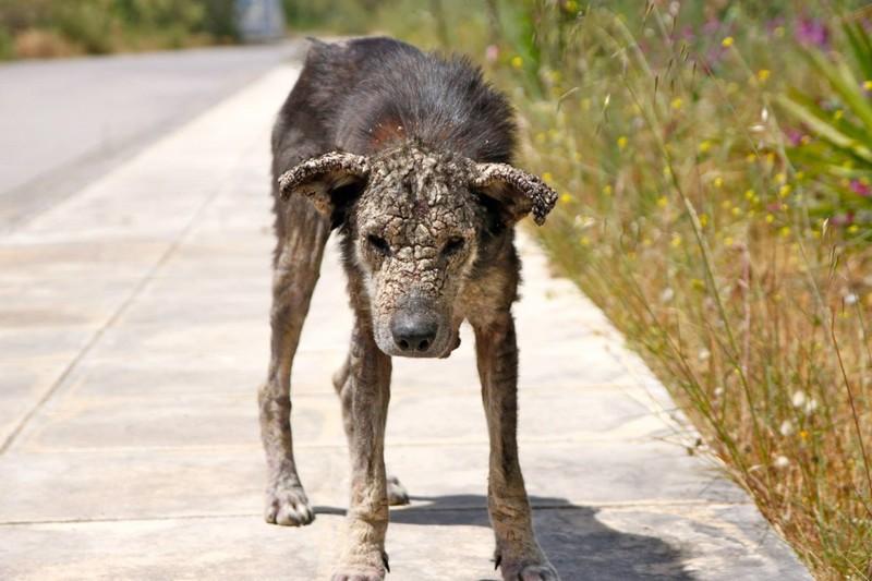 La historia de petra, la perra rescata de las calles de Atenas3