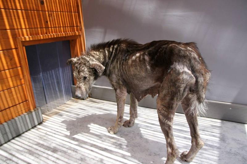 La historia de petra, la perra rescata de las calles de Atenas5