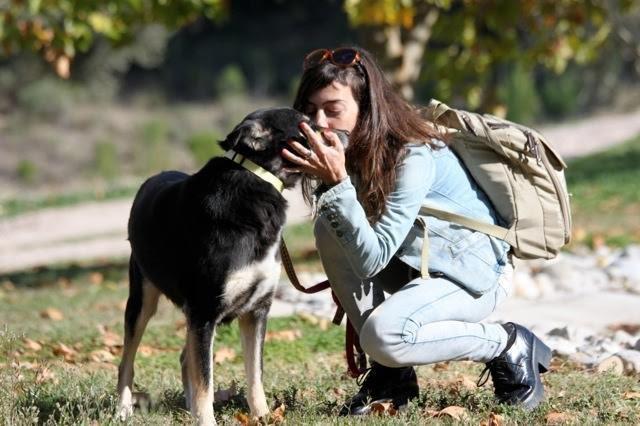 La historia de petra, la perra rescata de las calles de Atenas7