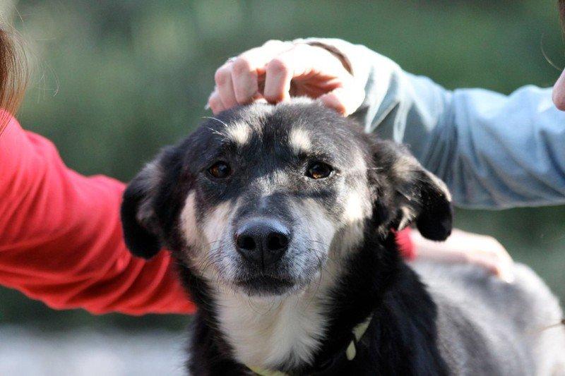 La historia de petra, la perra rescata de las calles de Atenas8