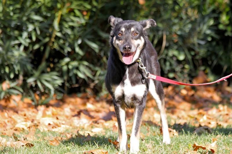 La historia de petra, la perra rescata de las calles de Atenas9