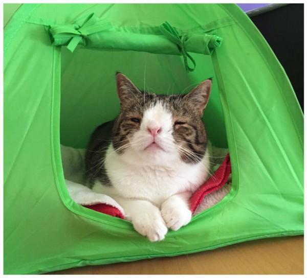 Monty, el gato con sindrome de down 7